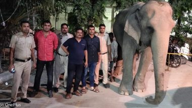 Laxmi, the Elephant Missing From Yamuna Found Near Delhi Police Headquarter