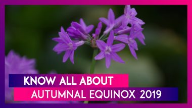 Autumnal Equinox 2019: Know The Date In India And The Speciality Of The Fall Equinox
