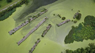 Tamil Nadu: Sea Turns Dark Green Colour Due to Presence of Algae