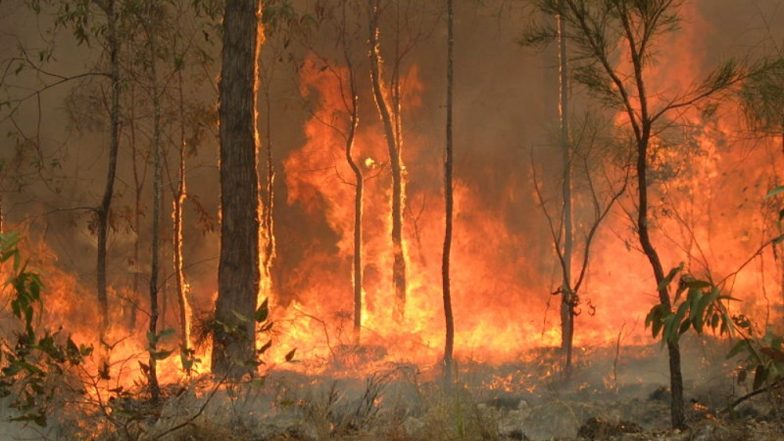 bushfires nsw - photo #15