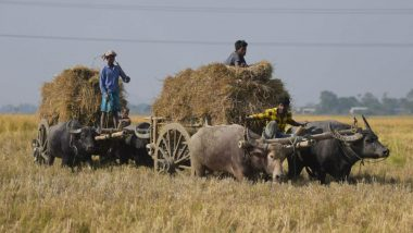 Bullock Cart Owner Fined Rs 1000 Under Motor Vehicles Act in Uttarakhand, Challan Cancelled As Cops Can't Penalise Bullock Cart As Per Rule