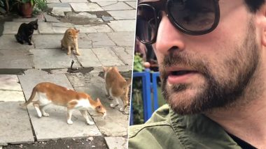 Four Cats Attack a Cobra Snake! Viral Video Shared by Neil Nitin Mukesh Leaves The Internet Shocked