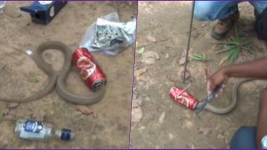 Cobra Snake Gets Stuck in Beer Can at Odisha, Locals Rescue and Release it Into Wild (View Pics)