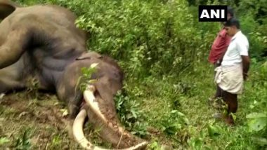 Kerala: Male Elephant 'Maniyan' Found Dead at Pullumala Forest in Wayanad District (See Pics)