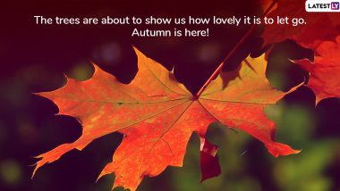First Day of Fall 2019 in September That Marks Autumn Equinox: Mabon Greetings, GIFs, Wishes, HD Images, Photos and Quotes for All of You