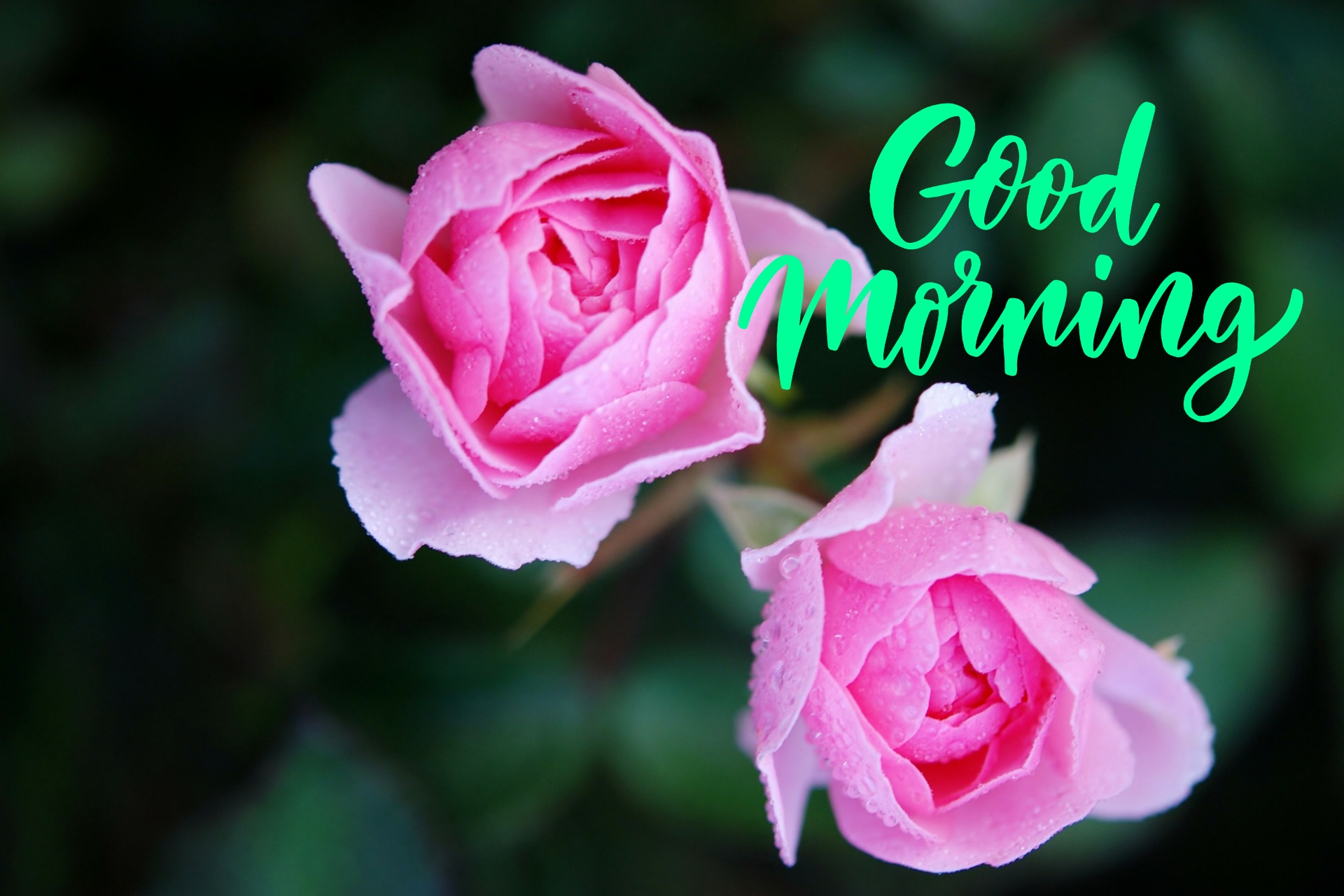 Good Morning Messages With Lord Ganesh Hd Images And