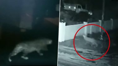 Leopard Enters House And Runs Away With Dog in Mouth in Karnataka's Shivamogga, Watch Chilling Video