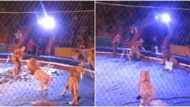 Lions Maul Trainer at Ukrainian Circus as Audience Scream; Terrifying Video From 2010 Goes Viral