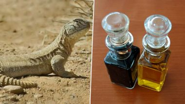 Sande Ka Tel to Increase Penis Size: Can Oil from Spiny Tailed Lizards Improve Sexual Performance and Prevent Erectile Dysfunction? (Watch Video)
