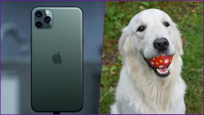 iPhone 11's 'Pet Portrait' Feature Will Let You Take Stunning Pics of Your Pets