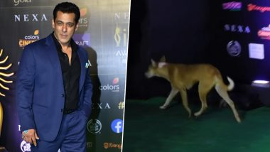 Salman Khan Stalked at the IIFA Awards 2019 … By An Adorable Stray Dog! Watch The Hilarious Video