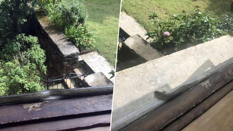 Sharmistha Mukherjee Posts Photos of Snake Peeping Through Window of Her Cottage, Congress Spokesperson Calls it 'Most Scary Experience'