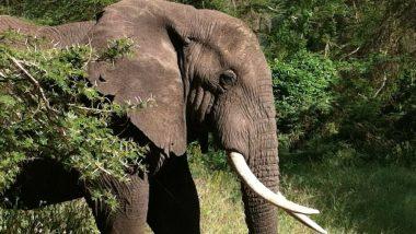 Karnataka Minister ST Somashekar Gowda Adopts Mysuru Zoo Elephant Chamundi for 1 Year
