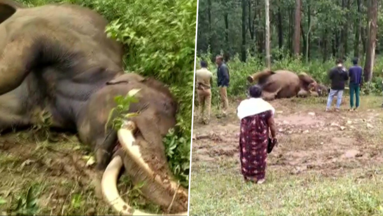 Wayanad's Favourite 'Gentle' Wild Elephant Maniyan Passes Away; Tusker Seems to Have Died During Fight Over 'Mating Rights'
