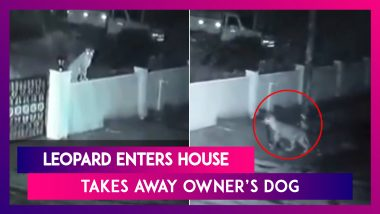 Scary! Leopard Enters House, Walks Away With Owner's Dog In Karnataka's Shivamogga