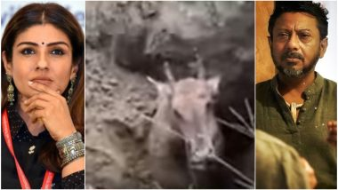Nilgai Buried Alive: Raveena Tandon, Onir Outrage Over the Horrific Video Showing Animal Cruelty
