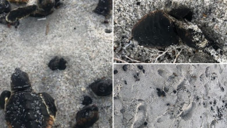 Hurricane Dorian in Florida: Baby Turtles Set on Fire and Burnt to Death at Beach (View Heart-Breaking Pictures)