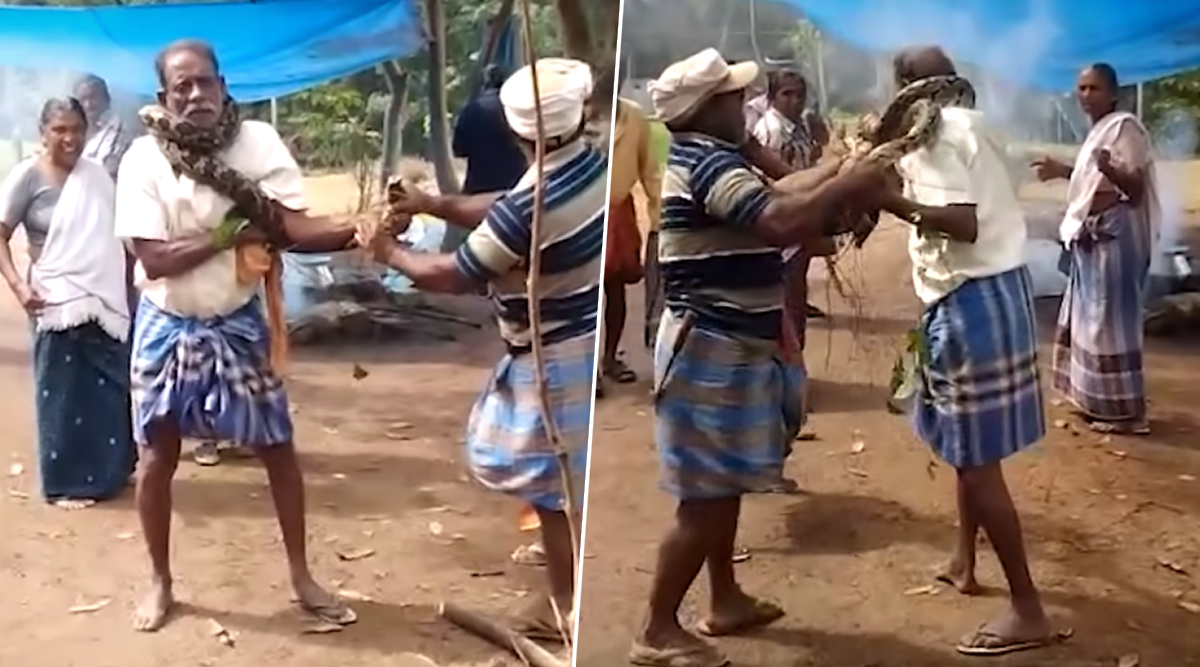 Kerala Man Rescued From 10-Foot-Long Python by Fellow Works in Thiruvananthapuram; Watch Video