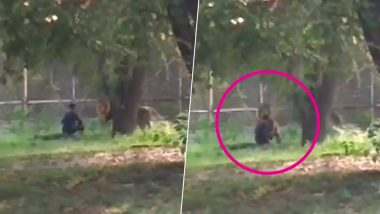 Mentally Unstable Man Enters Lion Enclosure at Delhi Zoo, Rescued Unhurt; Watch Chilling Video