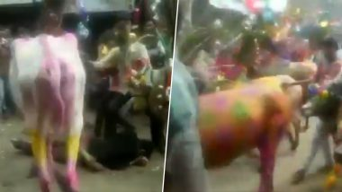 Gujarat: Villagers Allow Cows & Bulls to Run Over Them During 'Gaai Gohri' Festival in Dahod (Watch Video)