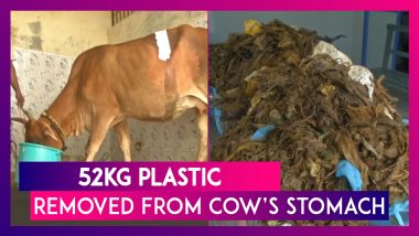 Tamil Nadu  52kg Plastic Removed From Cow's Stomach In Chennai