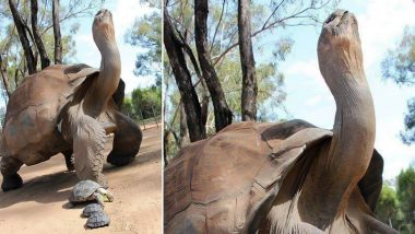 Africa's Oldest Tortoise Alagba Passes Away!  '344-Year-Old' Royal Tortoise Dies in Palace of Ogbomoso in Nigeria