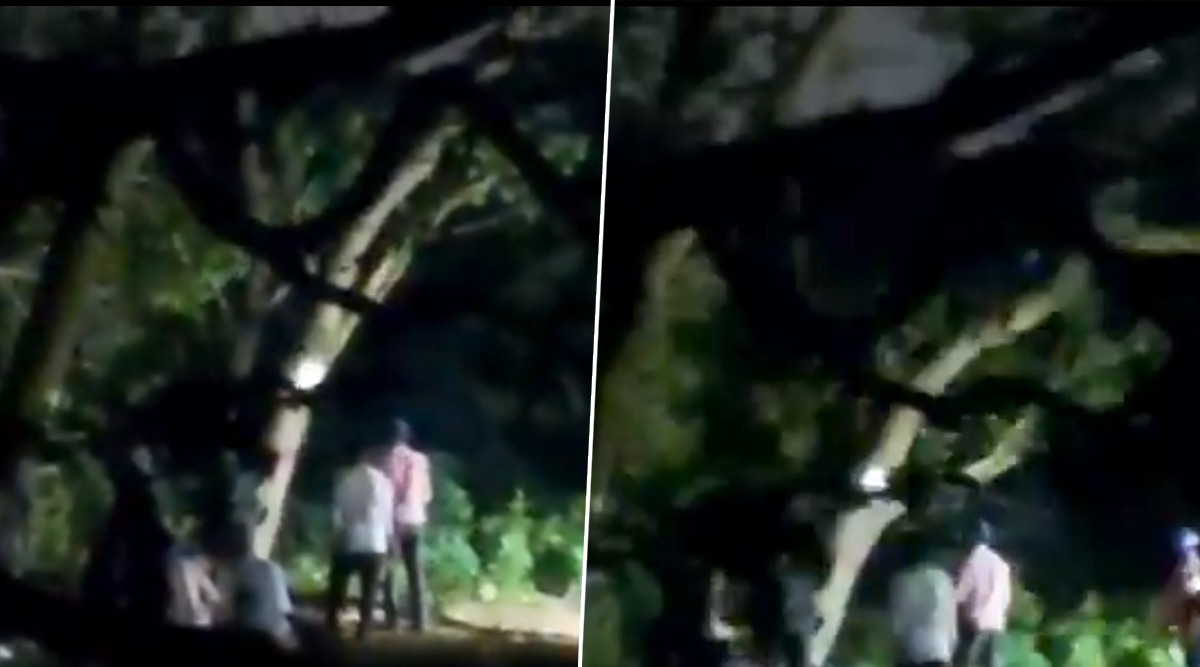 Aarey Tree Cutting: Video Shows Authorities Starts Chopping Down Trees Hours After Bombay High Court Dismisses Petition, Twitterati Cries Foul