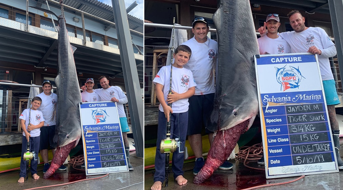 Australian Boy Catches 314kg Tiger Shark That Followed His Boat off Sydney Coast (Pictures and Video)