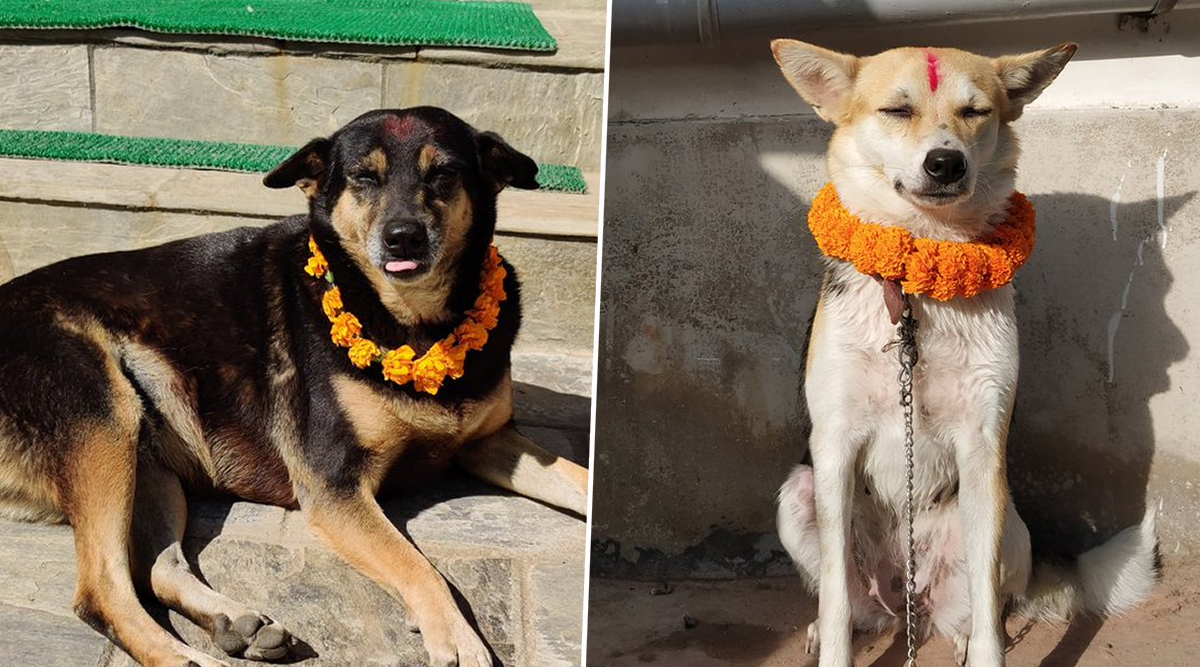 Kukur Tihar 2019: Twitterati Share Pictures of Nepalese Festival Dedicated For Dogs; See Pictures