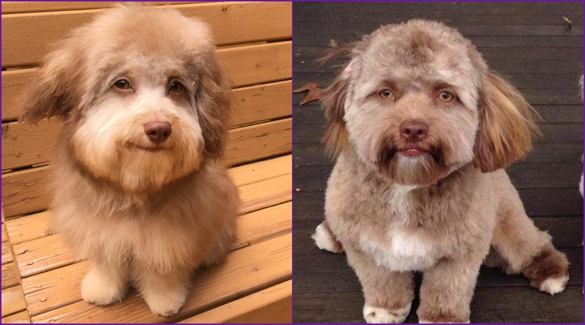Nori the Dog With 'Human Face' Is Not the Only Pooch That Looks Like a Person! Meet Yogi (View Pics)