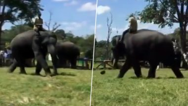 Cute! Elephants Playing Football At Dubare Camp In Karnataka's Kodagu Will Take Away Your Mid-Week Blues (Watch Video)