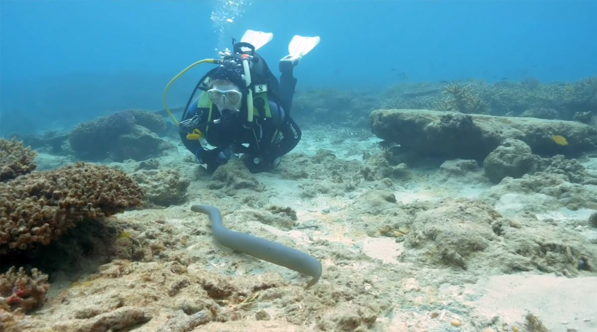 Grandmothers Swimming Underwater Uncover Large Population of Venomous Sea Snakes in Noumea, Watch Video