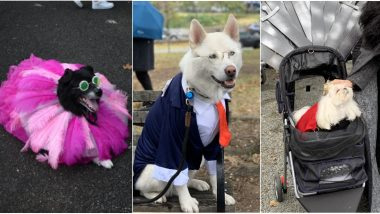 Best Foot Paw-ward! Annual Halloween Dog Parade 2019 in Manhattan Sees Pooches Dressed up in Creative Costumes (View Adorable Pics)