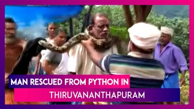Scary! Man Rescued From Python By Locals In Thiruvananthapuram