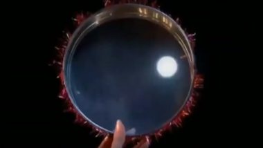 Moonrise Timing for Karwa Chauth 2019 in Bengaluru: When Will Karva Chauth Chandrama be Seen on October 17 in The Karnataka Capital?