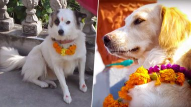 Kukur Tihar 2019: Date And Significance of Nepal's Dog Festival During Diwali Celebrations