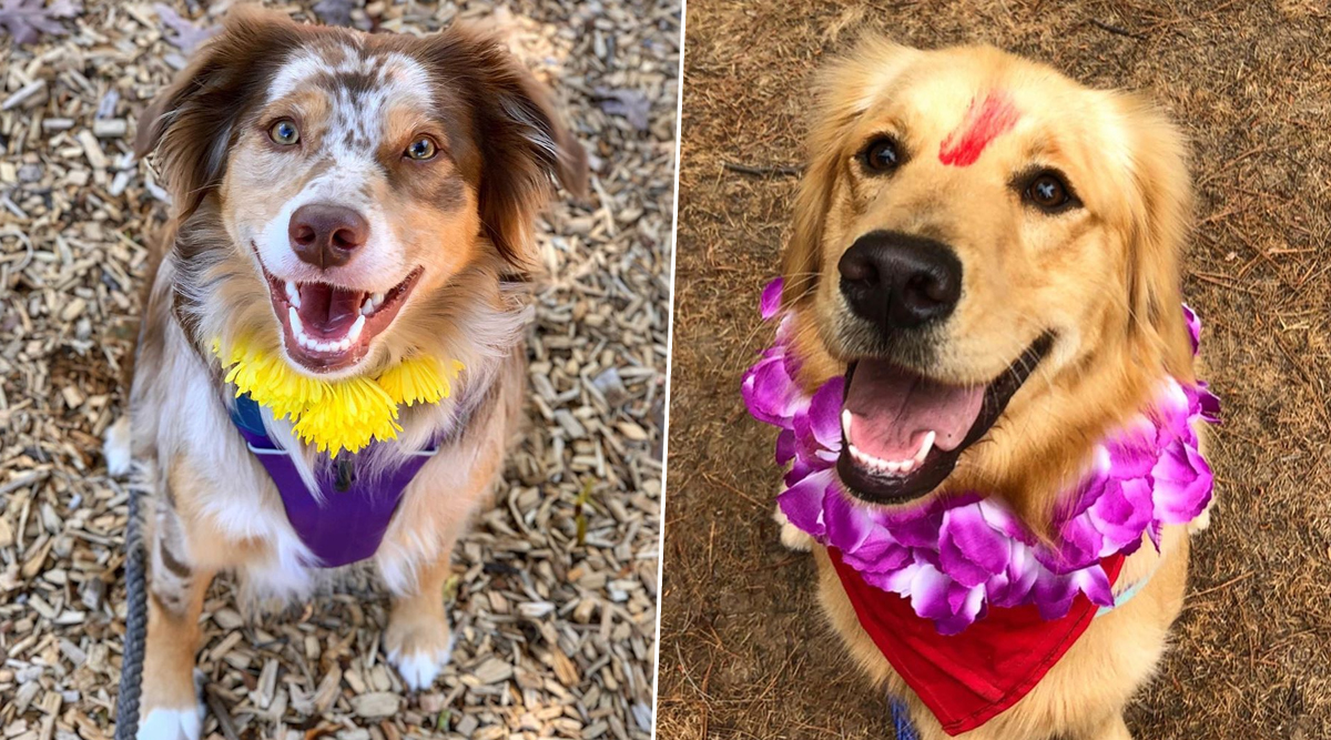 Kukur Tihar 2019 Photos: Check Adorable Pictures of 'Day of The Dogs' Celebrated in Nepal
