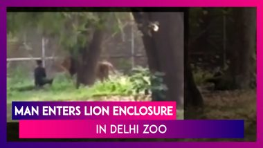 Shocking! Man Enters Lion Enclosure In Delhi Zoo, Escapes Unhurt