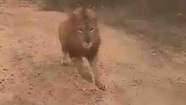Man vs Wild: Lion Chases Tourists During Safari Ride at Atal Bihari Vajpayee Zoological Park in Karnataka, Video Goes Viral