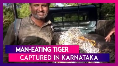 Karnataka Man Eating Tiger Who Killed Two People, Captured In Bandipur Forest Area, Chamarajanagar
