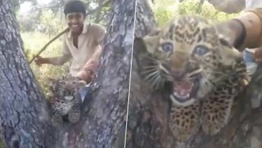 Men Harass Leopard Cub Near Gir Forest, Netizens Share Shocking Video Looking For The Culprits