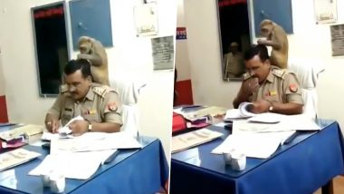 Monkey Gives Head Massage to UP Police Inspector While He Works, Funny Video Goes Viral