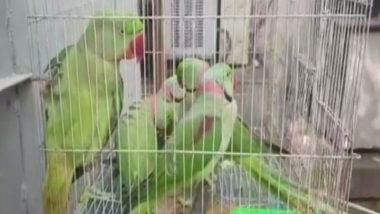 13 Parrots Were Produced Before Delhi Court  Today, Here's Why!