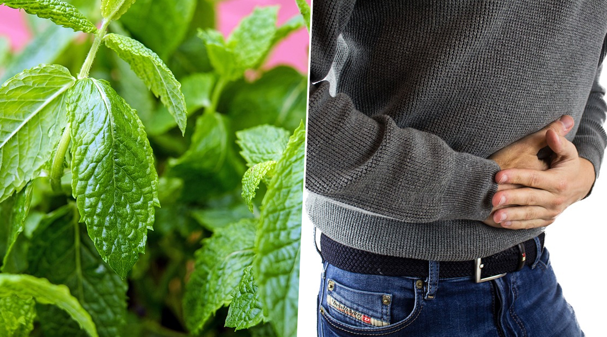 Home Remedy Of The Week: Pudina For Acidity and Heartburn; How Mint Leaves Can Cure Gas and Indigestion