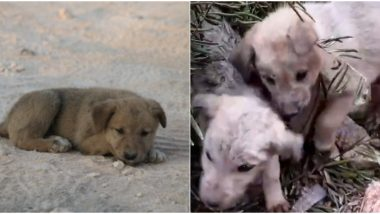 As Everyone Talks About US Service Dog Injured During Raid on ISIS, Here's a Beautiful Thread About Puppies Rescued After Their Mom Died in The Same Mission
