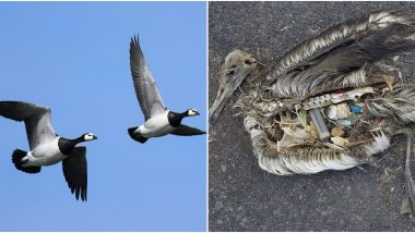World Migratory Bird Day 2019: How to Fight Plastic Pollution to Save Our Feathered Friends And Their Habitats
