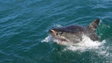 39 Australian Shark Species at Risk of Extinction: Report