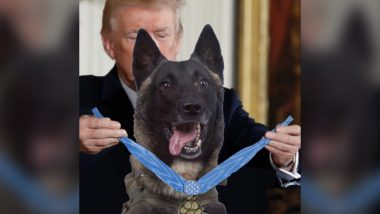Donald Trump Tweets Fake Photo of Dog Injured in Abu Bakr Al-Baghdadi Raid, Evokes Howls of Laughter