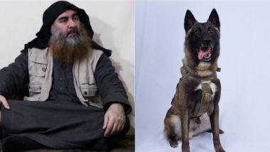 Abu Bakr al-Baghdadi Killing: Donald Trump Shares Picture of Dog Injured in US Raid That Killed ISIS Chief