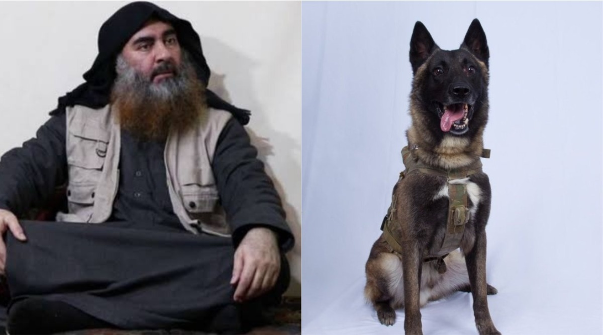 Abu Bakr al-Baghdadi Killing: Donald Trump Shares Picture of Dog Injured in US Raid That Killed ISIS Chief
